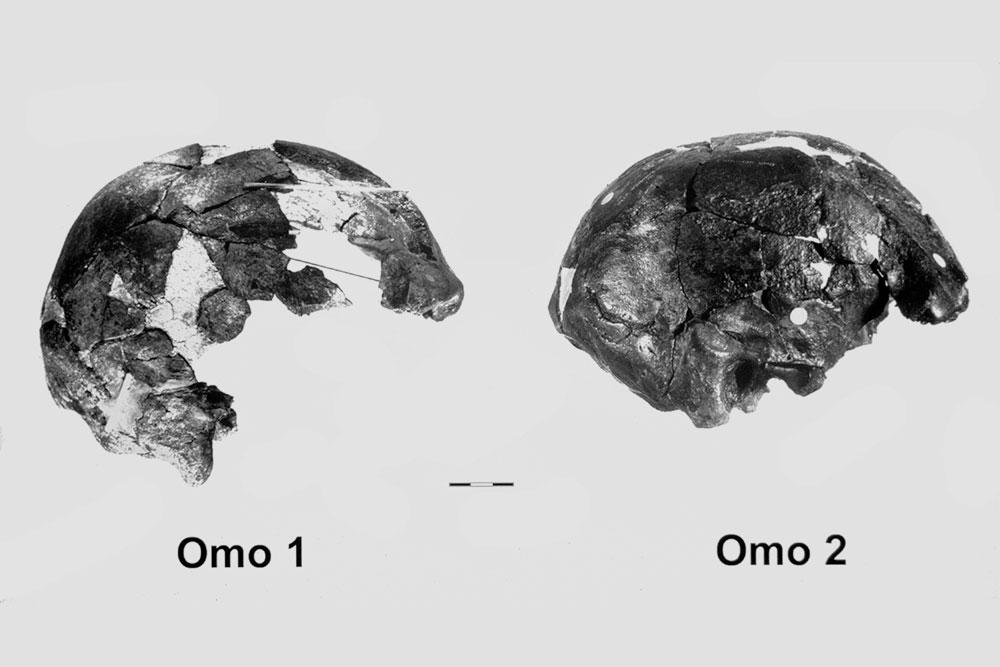omo 1 and omo 2