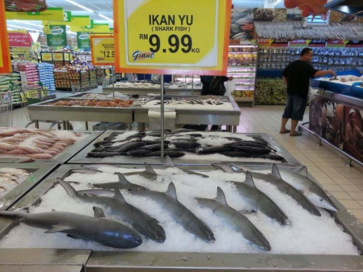 sharks at Giant