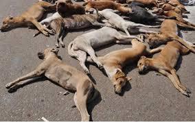 dogs poisoned in bukit bintang