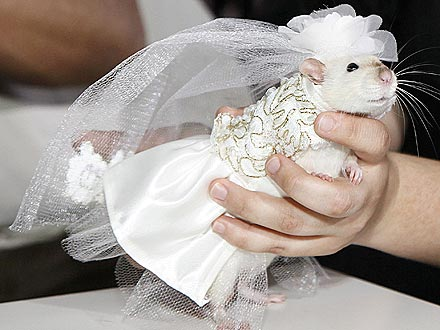 For Halloween this year, I've decided to go as Miss Havisham. Image from peoplepets.com