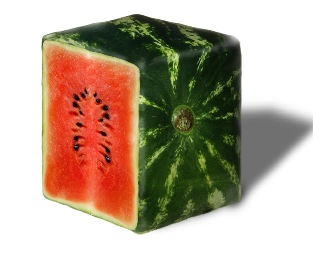 square-melon