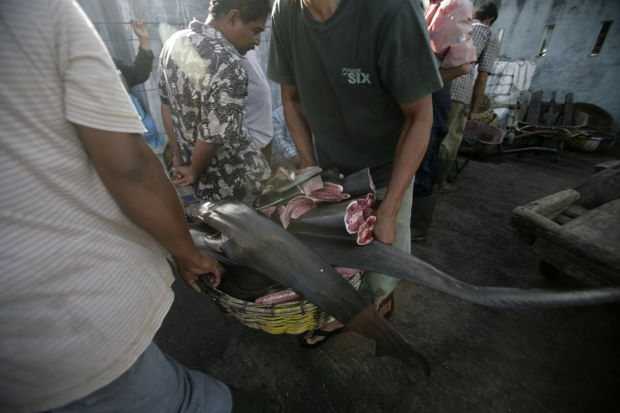we're one of the top ten illegal sharkfin exporters in the world.
