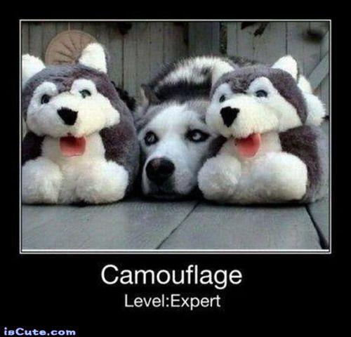 camouflage siberian husky slippers. Image from frabz.com.