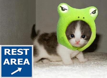 cute-animals-1 copy