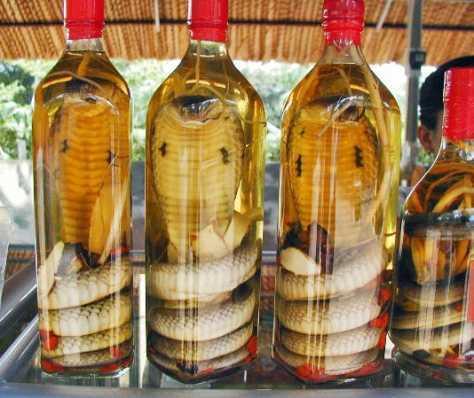 snake wine image from gurutotheoutdoors.com.
