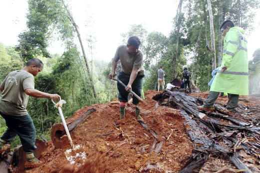 MACC and Forestry Department guys dig up timber 'mass graves'. Image from NST