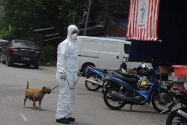 taking a stray dog off the streets culling rabies. Image from The Star