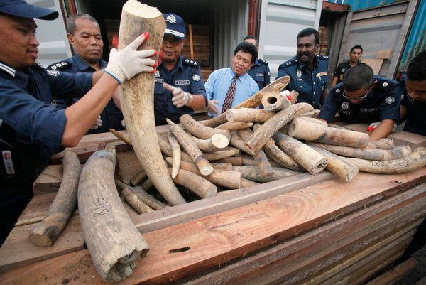 police raid ivory stash. Image from The New York Times