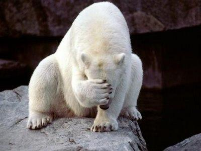 polar bear facepalm. Image from reactionface.info.