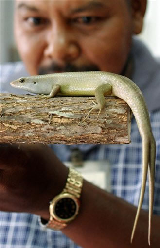 lizard-two-tails