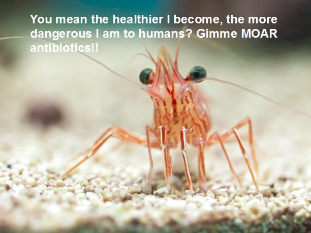 cute prawn antibiotics US import ban Image from William Warby on Flickr
