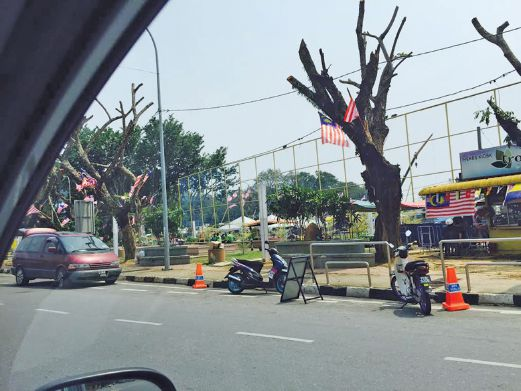 kangar perlis trees Image from New Straits Times