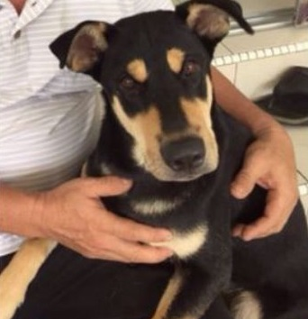 rocky pet dog animal welfare act shot stray Image from The Star