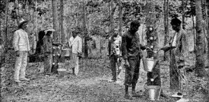 Indian workers at a rubber plantation. Again got mat salleh watching. Pic from iumwmalaysianstudies.blogspot.my