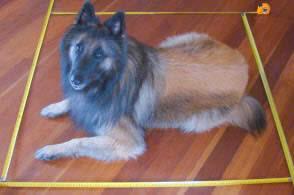 dog-in-one-1-square-metre-meter