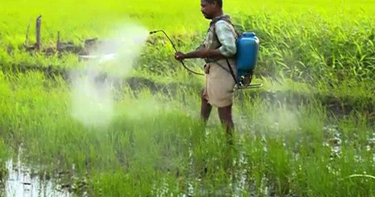pesticide-poisoning-india-endosulfan