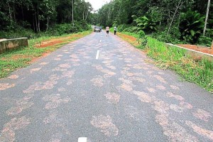 And it was such a lovely asphalt job too. Photo of the alleged Bigfoot footprints in Endau Rompin, from The Star.