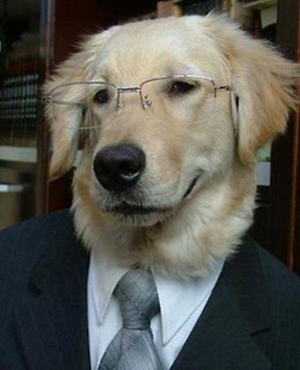 Lawyer doggo approves of this header. Source