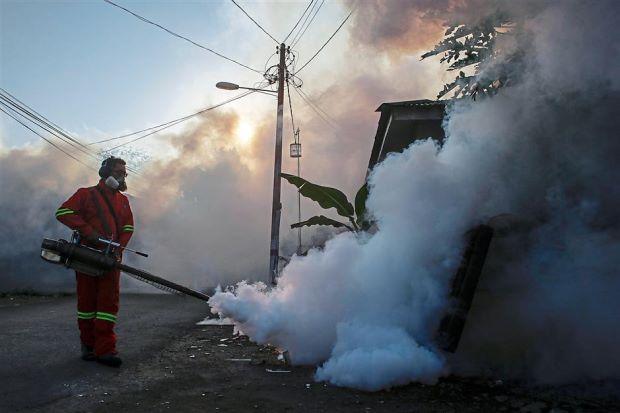 fogging mosquito dengue star