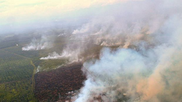 Clearing of palm oil plantation in Aceh. Photo from smh.com.au