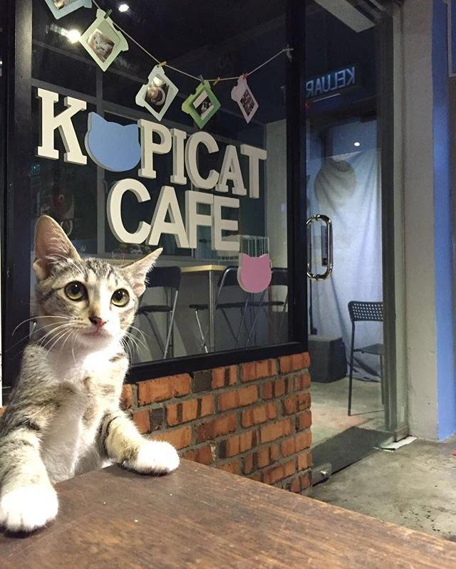 pet-cafes-in-malaysia-thesmartlocal-3