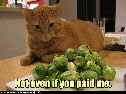 Not Even If You Paid Me cat cabbage vegetable
