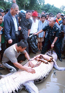 A hand and a leg extracted from the belly of Bujang Subis. Img from Utusan.