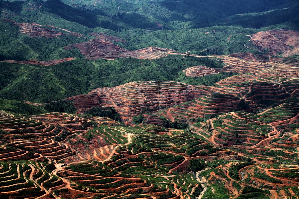 Vast chunks of Sabah's rainforests are being eaten into by palm oil plantations. Image via alert-conservation.org