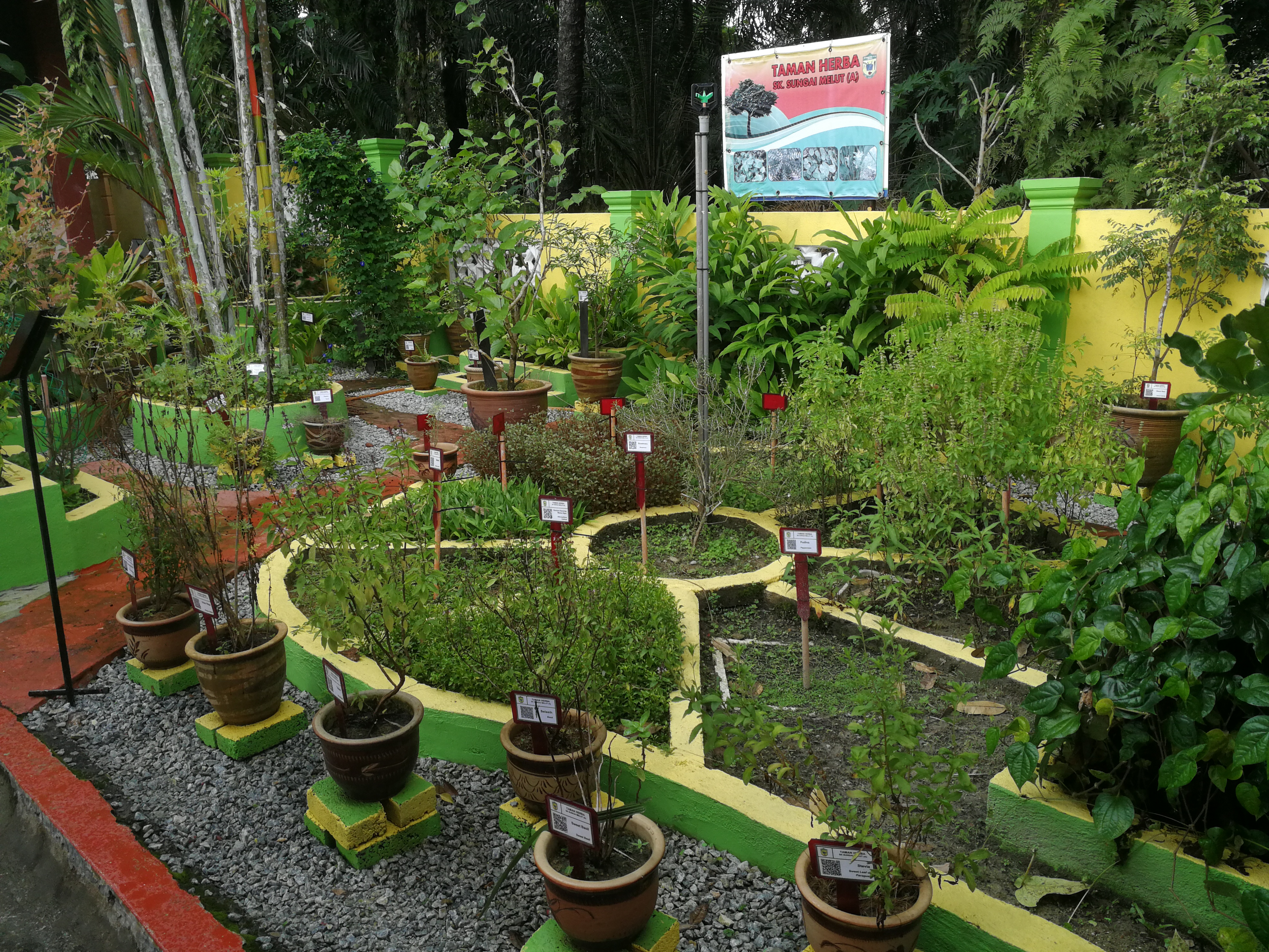 Nobody dares to touch the herbs, because the teacher who built it is very protective of them.
