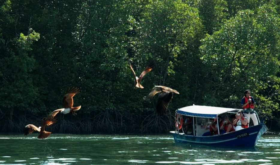 Eagles are still being fed junk food several times a day. Img from la villa Langkawi.