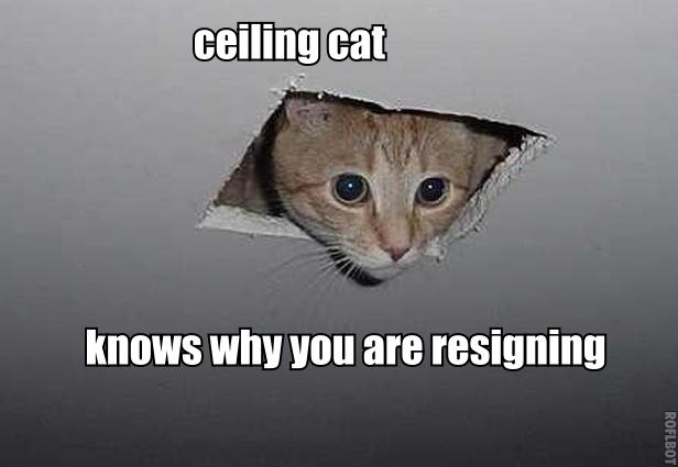 Ceiling cat must read Reuters. Img from KnowYourMeme.