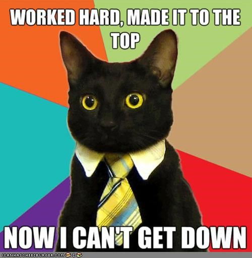 Business corporate cat regrets his career choices. Img from Cheezburger.