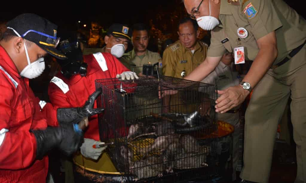 Rat campaign in Jakarta. Img from Jakarta Post.