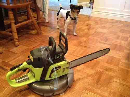 This dog SAW the future, and it's looking kinda scary. Image from KnowYourMeme