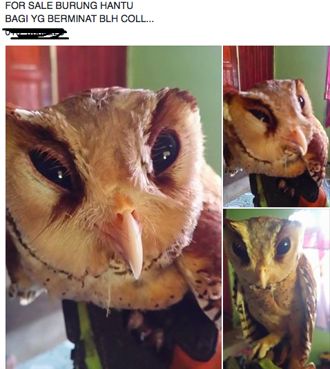Malaysian traders have been known to openly trade wildlife on social media. Img from Annamiticus.