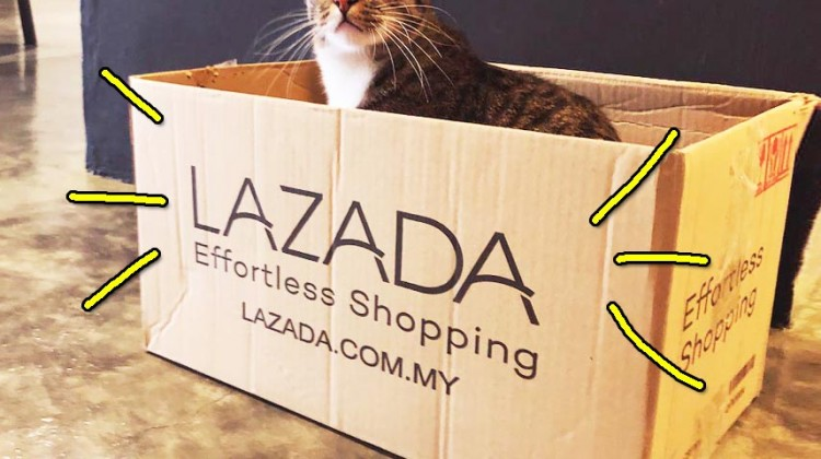lazada evolution zumi featured image cropped