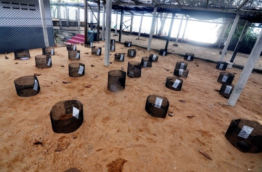 Padang Kemunting Turtle Sanctuary. Image from NST.