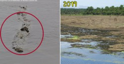 Tasik Chini is drying up. Will we finally see if Malaysia's Loch Ness monster exists?