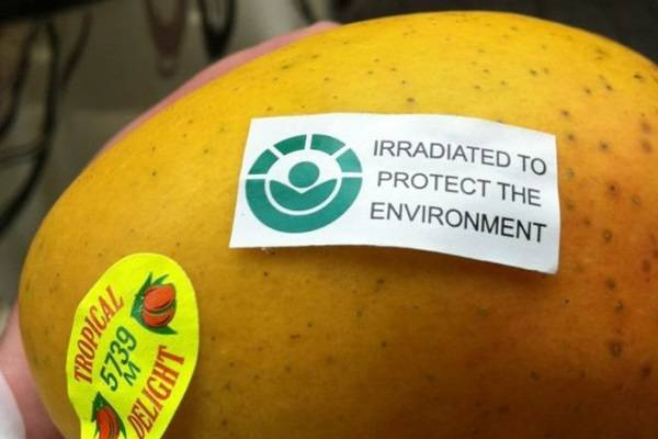 An irradiated mango. Image from Farm Online Australia.